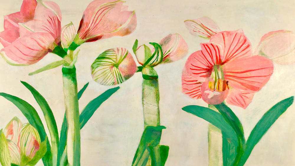 EVENTS Antiques Studies of Amaryllis Flowering 1000px x 563px